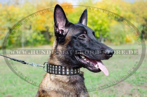 ForDogTrainers Hundehalsband Leder mit Dekor