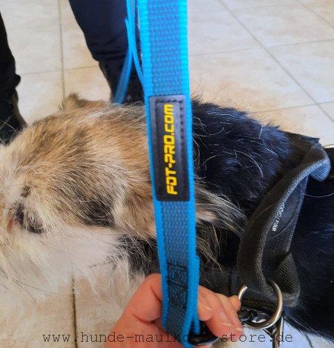 Rissfeste Huneleine aus Nylon 20 mm breit für Hundesport und Alltag