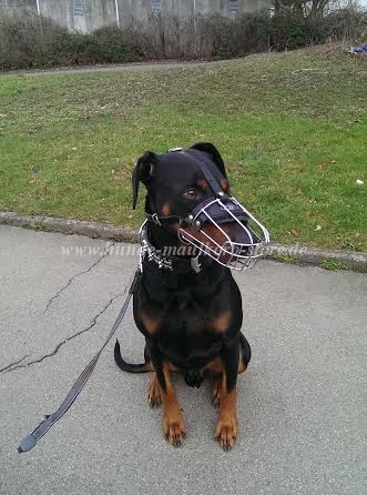 Dobermann Maulkorb Metall