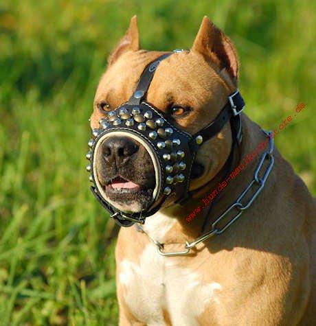 Hundehalskette mit großen Gliedern