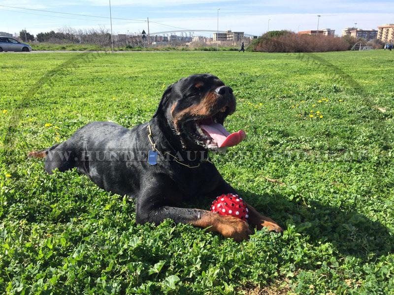 Hundeball aus vinyl cm piepsendes spielzeug für hunde