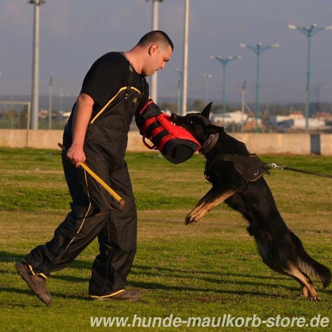 Hunde ipo training im urlaub