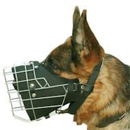 Hundehalsband Nieten