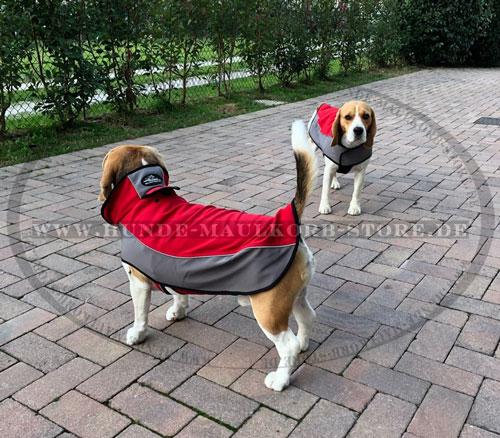 warmes Hundegeschirr für Beagle