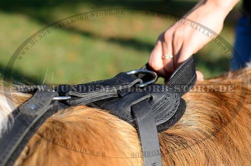 Brustgeschirr mit Handgriff für ausgezeichnete Kontrolle