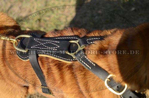 Hundegeschirr aus Leder im Luxus Design ohne Handgriff