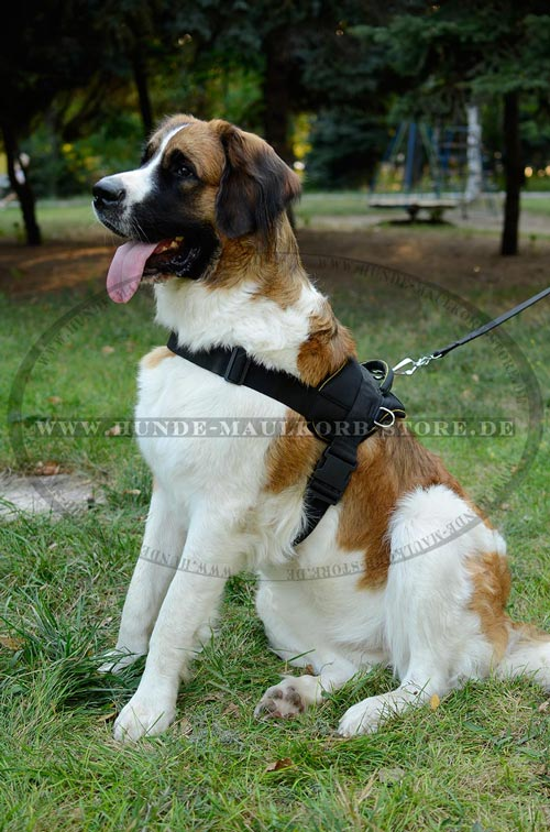https://www.hunde-maulkorb-store.de/images/harnesses/Sport-Geschirr-aus-sicherem-Nylon-small.jpg