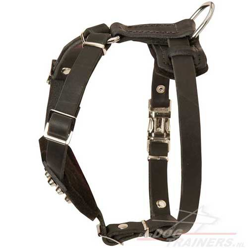 nice harness of leather H24