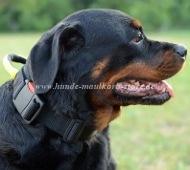 Rottweiler Hundehalsband aus Nylon mit Griff Superkontrolle