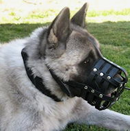 Siberian Husky Everyday Leather Dog muzzle