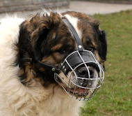 Wire Muzzle for dog with broad snout like Kaukazian Ovcharka