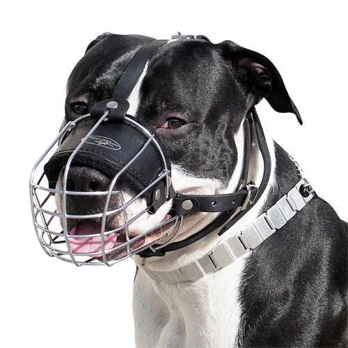 hund bellt hunde bellen der maulkorb hundemaulkorb. Black Bedroom Furniture Sets. Home Design Ideas