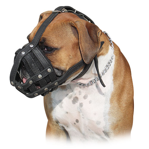 Leather Muzzle for Boxer