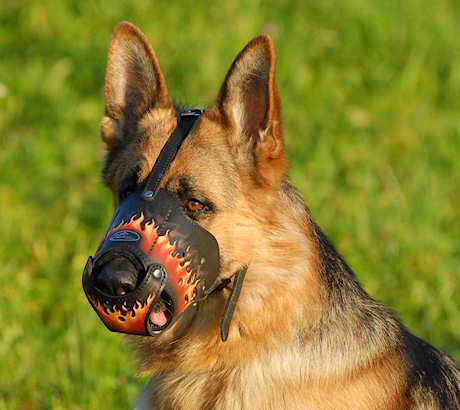Leder Maulkorb für Deutschen Schäferhund