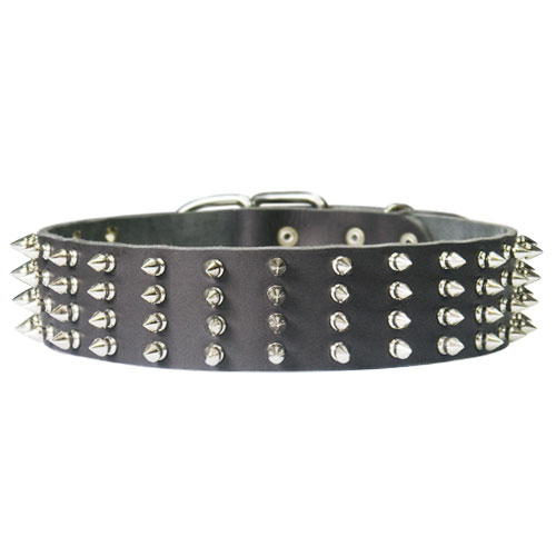 Extra wide spiked dog collar