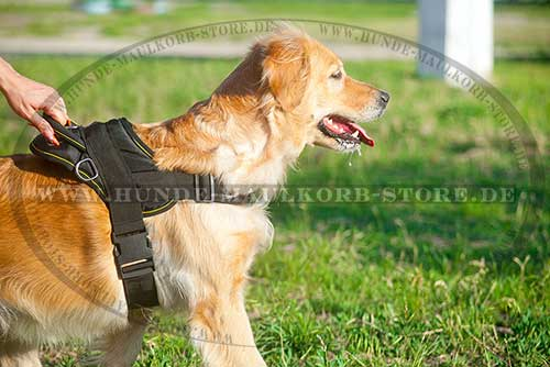 K 9 Golden Retriever Hundegeschirr Nylon | ...