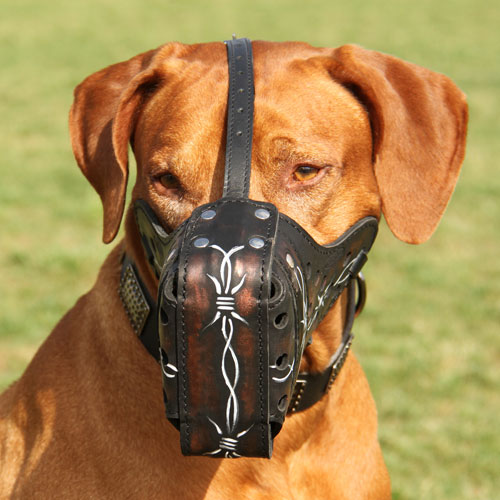 rhodesian ridgeback leder hundemaulkorb stacheldraht m77bw1055 stacheldraht maulkorb leder. Black Bedroom Furniture Sets. Home Design Ideas