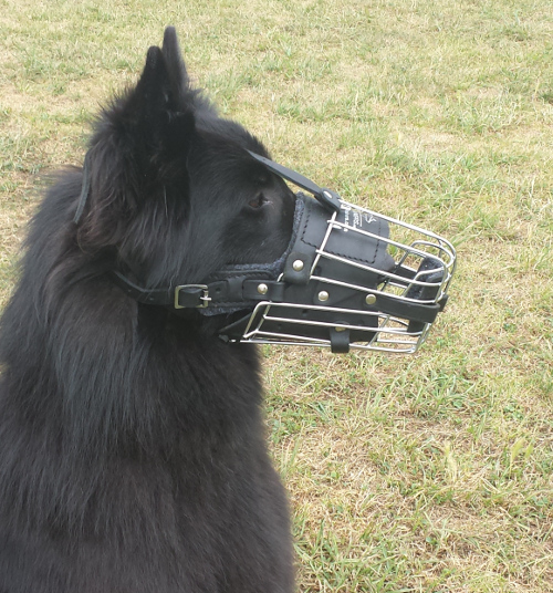 Wire Basket Muzzle for Shepherd