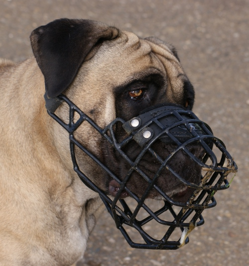 Wire dog muzzle for Mastiff