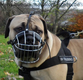 Wire dog muzzle for Boerboel