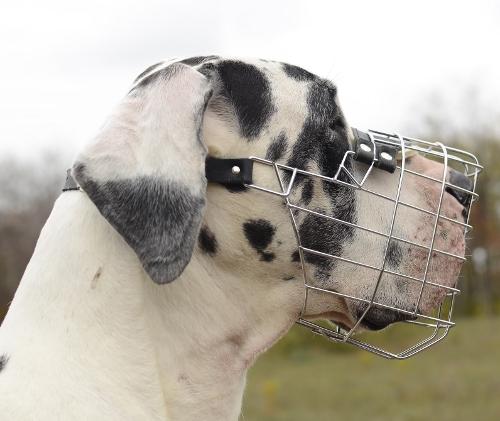 Drahtmaulkorb für Deutsche Dogge