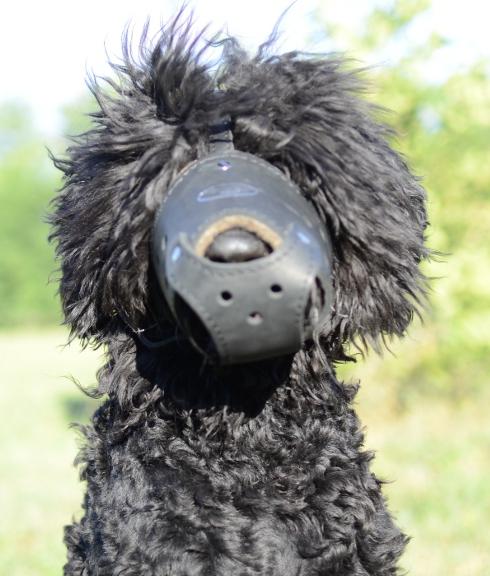Schwarzer Russischer Terrier Hundemaulkorb Leder