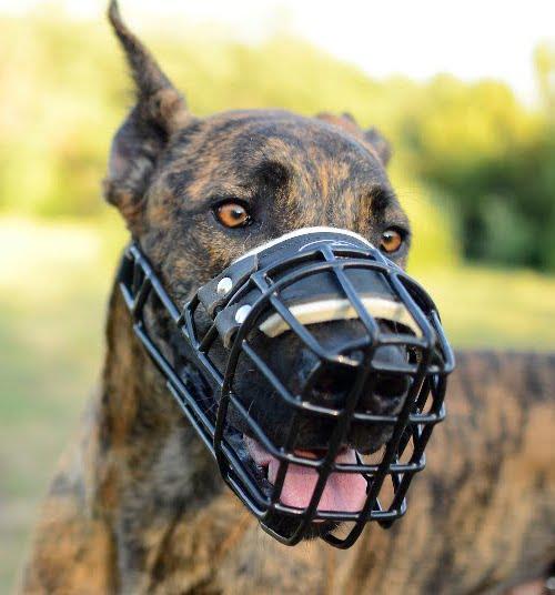 Maulkorb für Hunde ist ein unabdingbares Zubehör jedes Hundes.