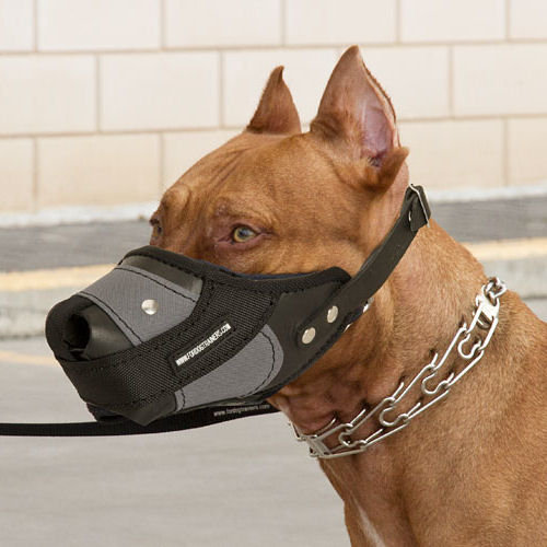 Dog Muzzle To Prevent Eating