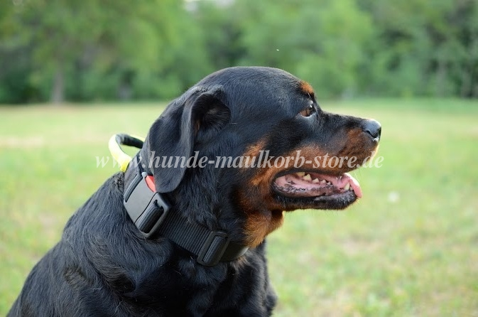 rottweiler hundehalsband aus nylon mit griff kontrolle. Black Bedroom Furniture Sets. Home Design Ideas