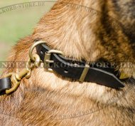 Leather Dog Collar for Belgian Malinois with Brass Plates