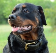 Rottweiler Leather Collar in Classic Style