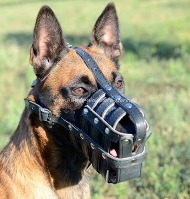 Royal Leather Dog Muzzle for Malinois | Dog Muzzle with Nappa