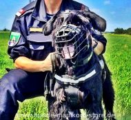 K9 Muzzle for Police for Riesenschnauzer
