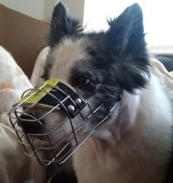Metal Dog Muzzle for Border Collie Mix