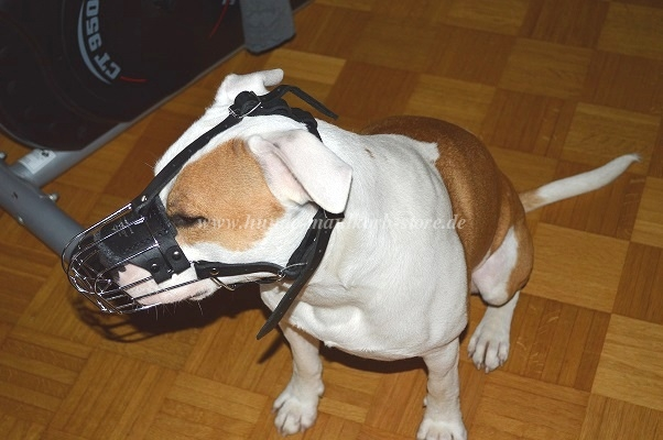 wire basket muzzle for amstaff