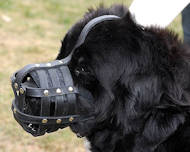 Newfoundland foEveryday Light Weight Ventilation Dog muzzle