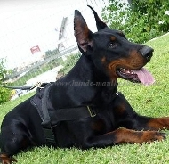 Dobermann Nylon multi-purpose dog harness H6