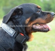 Rottweiler Collar made of Nylon with Patch Super Durable